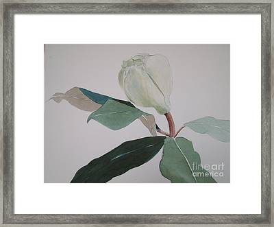 Magnolia Bud Framed Print by Nancy Kane Chapman