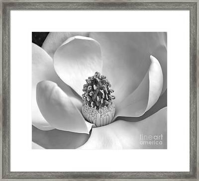 Magnolia Bw Framed Print by Jemmy Archer