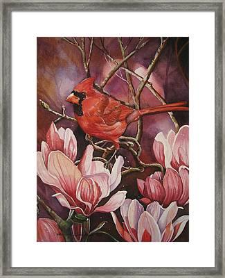 Magnolia Cardinal Framed Print by Cheryl Borchert