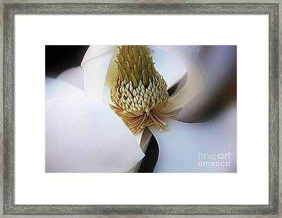 Magnolia Close Up Framed Print