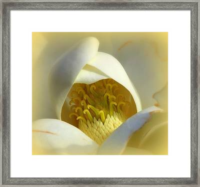 Magnolia Cloud Framed Print by Karen Wiles