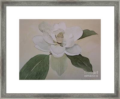 Magnolia Delight Framed Print by Nancy Kane Chapman
