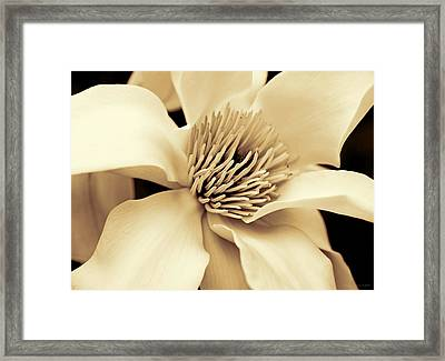 Magnolia Flower In Sepia Four Framed Print