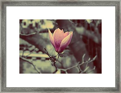 Magnolia Flower Framed Print by Marianna Mills