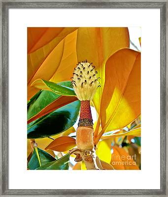 Framed Print featuring the photograph Magnolia Flower by Olga Hamilton