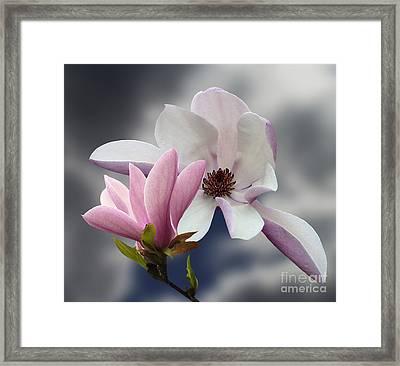 Magnolia Flowers Framed Print by Andrew Govan Dantzler