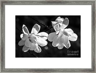Magnolia Flowers Framed Print by Elena Elisseeva