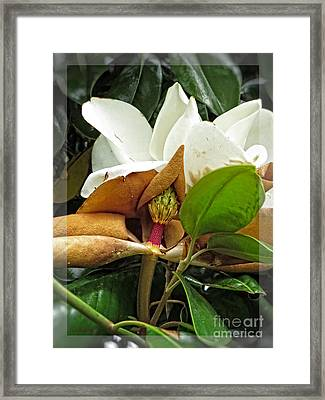 Magnolia Flowers - Flower Of Perseverance Framed Print
