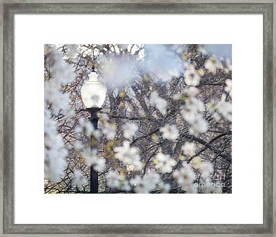 Magnolia Impression 1 Framed Print