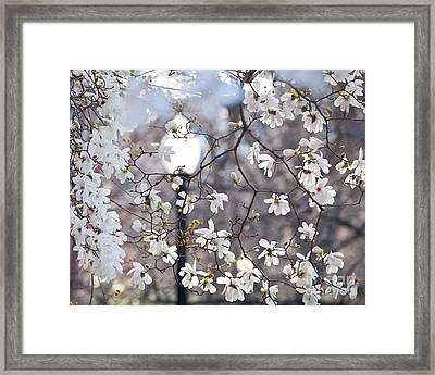Magnolia Impression 2 Framed Print