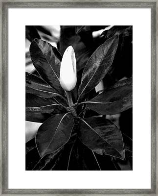 Framed Print featuring the photograph Magnolia by James C Thomas