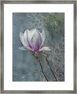 Magnolia Framed Print by Joachim G Pinkawa