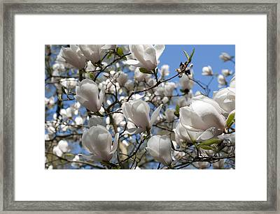 Framed Print featuring the photograph Magnolia by Lana Enderle