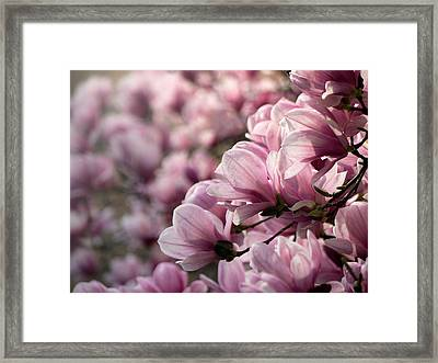 Magnolia Layers 2 Framed Print