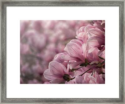 Magnolia Layers Framed Print