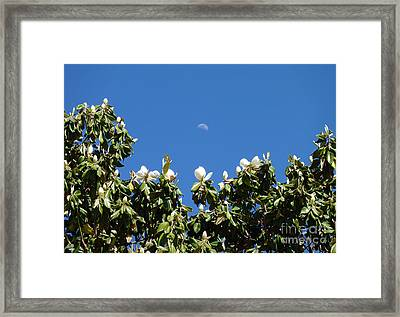 Framed Print featuring the photograph Magnolia Moon by Meghan at FireBonnet Art