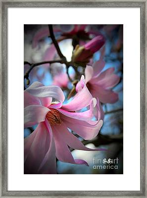 Magnolia Morning Framed Print