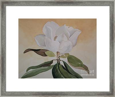 Magnolia Morning Framed Print by Nancy Kane Chapman