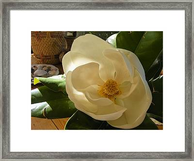 Magnolia Framed Print by Nancy Kane Chapman