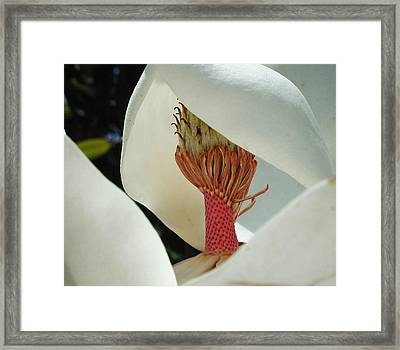 Magnolia Nun Framed Print by Leon Hollins III
