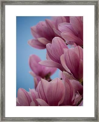Magnolia On Blue Sky Framed Print by Rob Amend