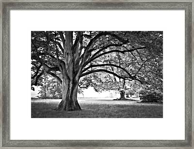 Magnolia On The Ware Framed Print