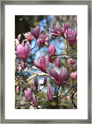 Magnolia Perspective Framed Print by Carol Groenen