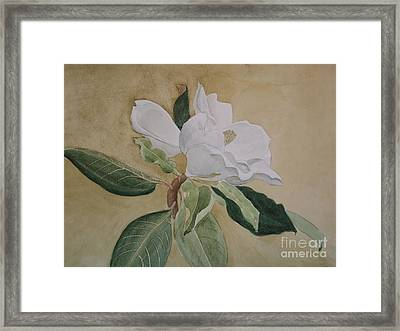 Magnolia San Marino Framed Print by Nancy Kane Chapman