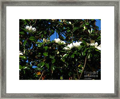Magnolia Setting Framed Print by Greg Patzer