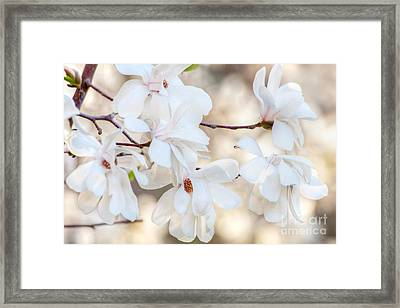 Magnolia Spring 1 Framed Print by Susan Cole Kelly Impressions