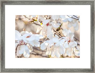 Magnolia Spring 2 Framed Print by Susan Cole Kelly Impressions