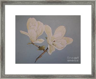 Magnolia Sun Ray Framed Print by Nancy Kane Chapman
