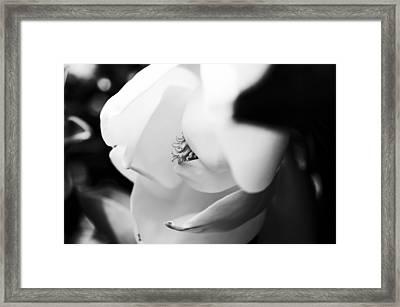 Magnolia Sweet Framed Print