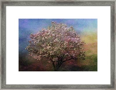 Magnolia Tree In Bloom Framed Print