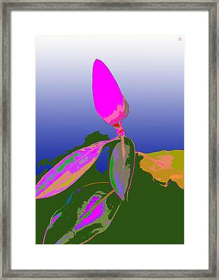 Magnolia2 Framed Print by Roger Smith