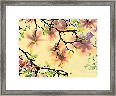 Magnoliart In Apricot And Light Green Framed Print