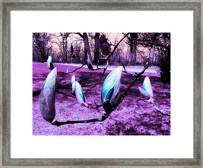 Magnolias In An Alien World Framed Print by Shawna Rowe