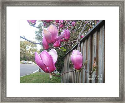 Framed Print featuring the photograph Magnolias In Bloom by Leanne Seymour