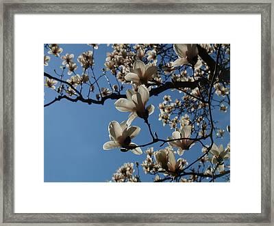 Magnolias Framed Print by Rita Haeussler