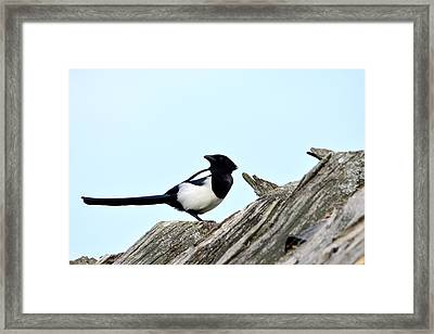 Magpie On Roofs Framed Print by Tommytechno Sweden