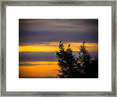Magpies At Sunrise Framed Print