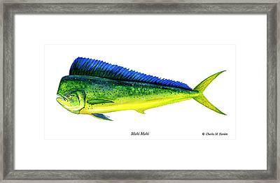 Mahi Mahi Framed Print by Charles Harden