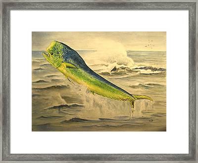 Mahi Mahi Framed Print by Juan  Bosco