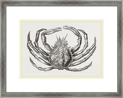 Maia Squinado Framed Print