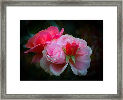 Framed Print featuring the photograph Maiden Mother Crone by Patricia Babbitt