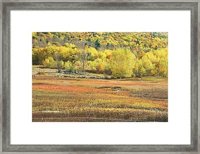 Maine Blueberry Field -fall Folige - Forest Framed Print
