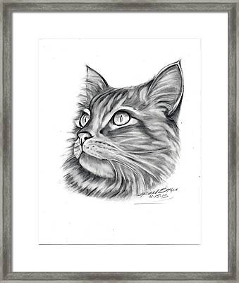 Maine Coon Framed Print by Barb Baker