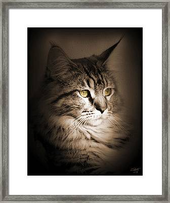 Maine Coon Portrait Framed Print