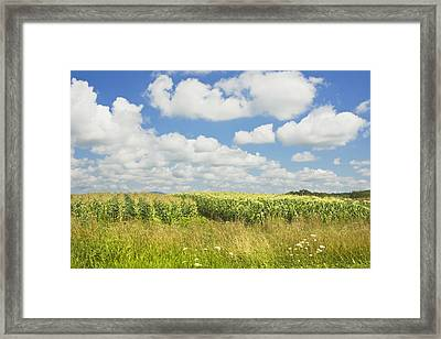 Maine Corn Field In Summer Photo Print Framed Print by Keith Webber Jr
