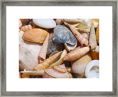Maine Harvest 3 Framed Print by Christine Dion